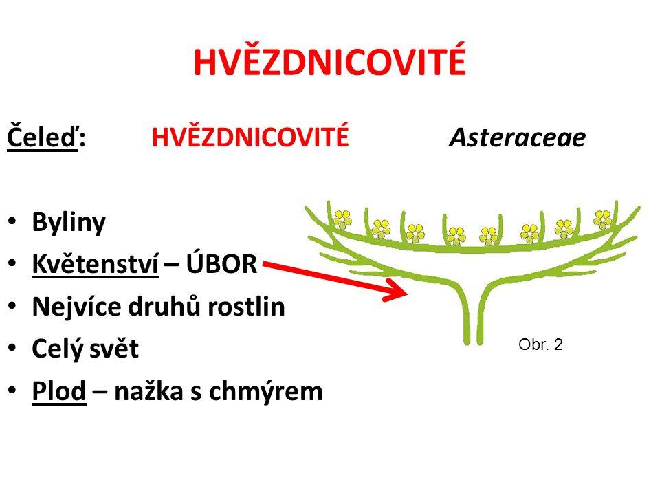 HVĚZDNICOVITÉ Čeleď: HVĚZDNICOVITÉ Asteraceae Byliny Květenství – ÚBOR Nejvíce druhů rostlin Celý svět Plod – nažka s chmýrem Obr.