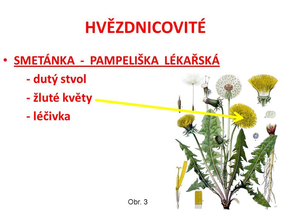 HVĚZDNICOVITÉ SMETÁNKA - PAMPELIŠKA LÉKAŘSKÁ - dutý stvol - žluté květy - léčivka Obr. 3