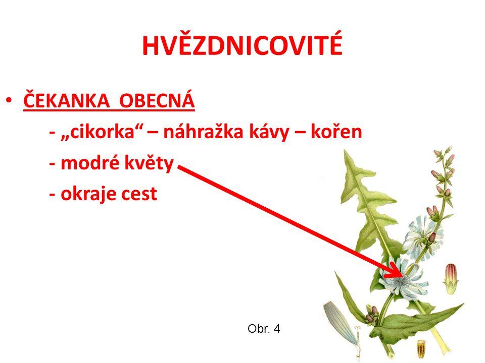 HVĚZDNICOVITÉ SLUNEČNICE ROČNÍ - 1 velký úbor - žluté květy - nažky – olej a krmivo Obr. 5