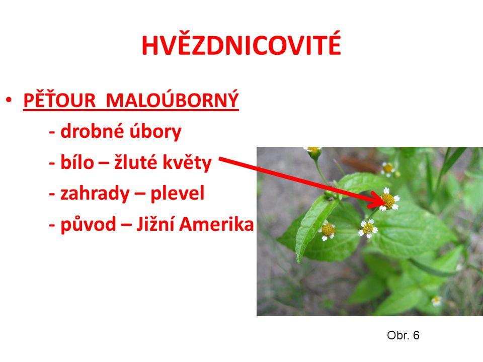 HVĚZDNICOVITÉ PĚŤOUR MALOÚBORNÝ - drobné úbory - bílo – žluté květy - zahrady – plevel - původ – Jižní Amerika Obr.