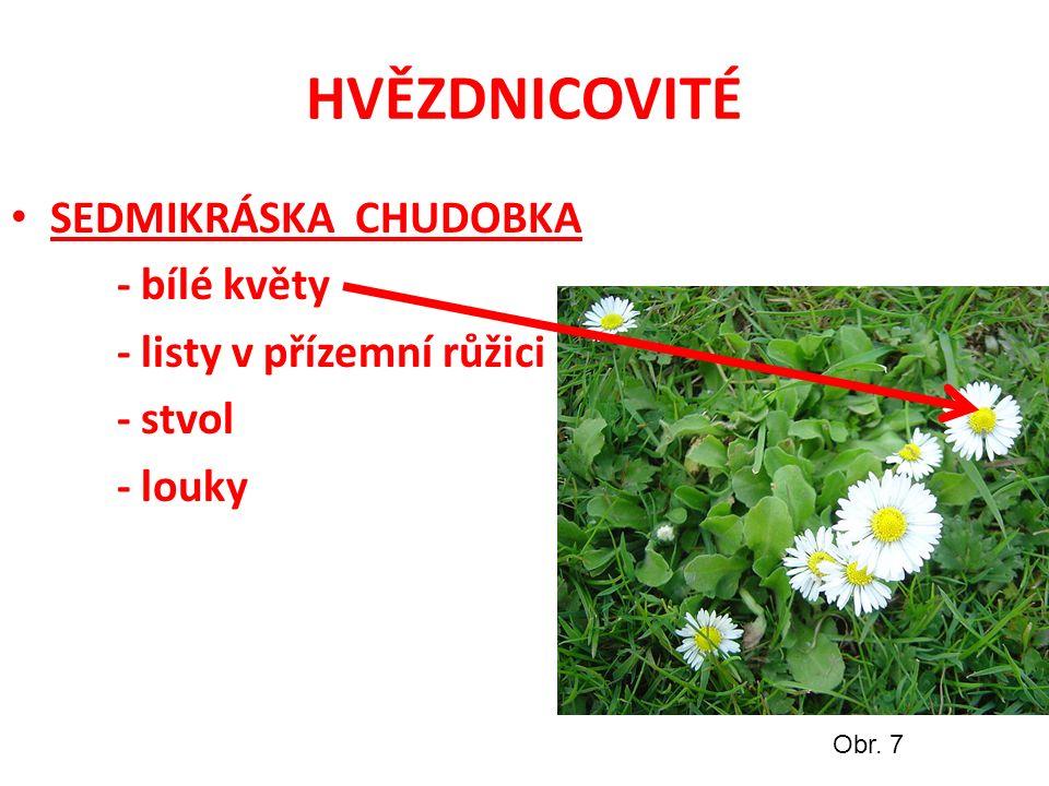 HVĚZDNICOVITÉ SEDMIKRÁSKA CHUDOBKA - bílé květy - listy v přízemní růžici - stvol - louky Obr. 7