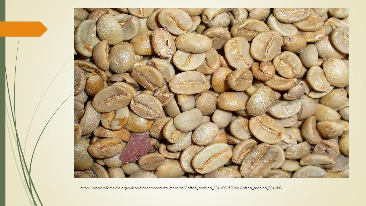 http://upload.wikimedia.org/wikipedia/commons/thumb/e/ef/Coffea_arabica_004.JPG/800px-Coffea_arabica_004.JPG