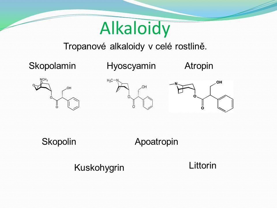 Alkaloidy Tropanové alkaloidy v celé rostlině.