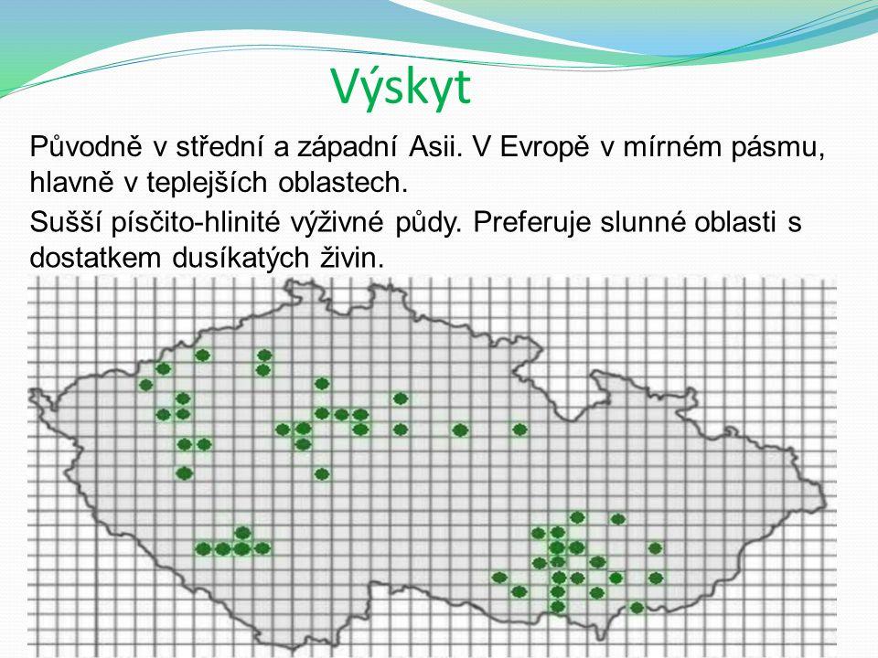 Výskyt Původně v střední a západní Asii. V Evropě v mírném pásmu, hlavně v teplejších oblastech.