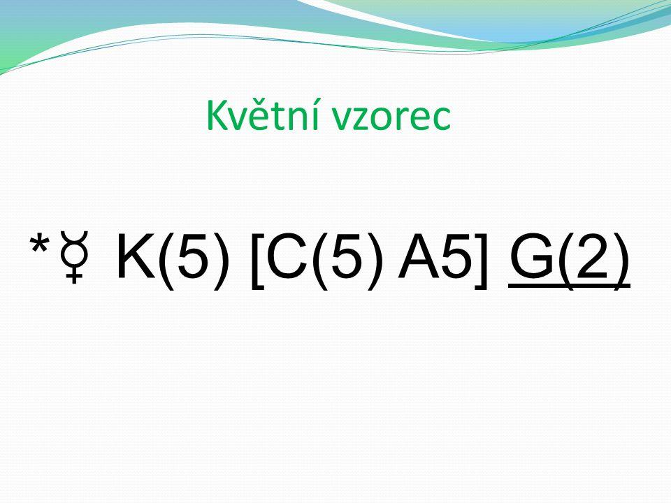 Květní vzorec * ☿ K(5) [C(5) A5] G(2)