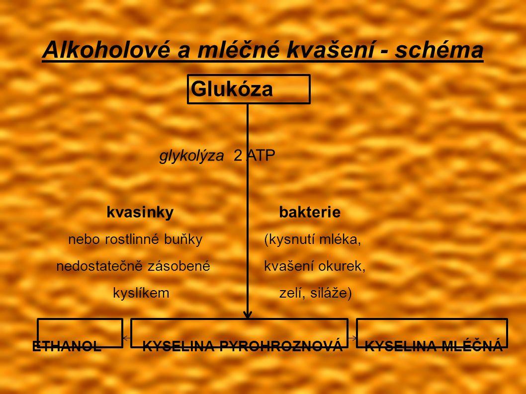 Alkoholové a mléčné kvašení - schéma Glukóza glykolýza 2 ATP kvasinky bakterie nebo rostlinné buňky (kysnutí mléka, nedostatečně zásobené kvašení okurek, kyslíkem zelí, siláže) ETHANOL KYSELINA PYROHROZNOVÁ KYSELINA MLÉČNÁ