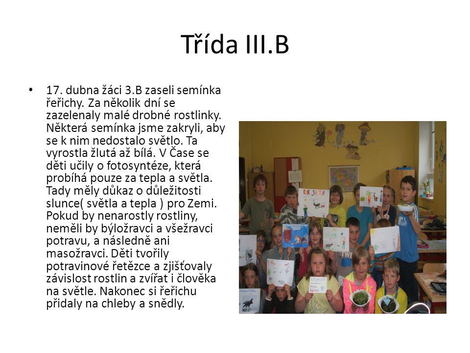 Třída III.B 17. dubna žáci 3.B zaseli semínka řeřichy.