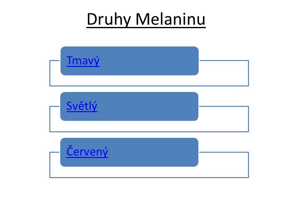 Druhy Melaninu TmavýSvětlýČervený
