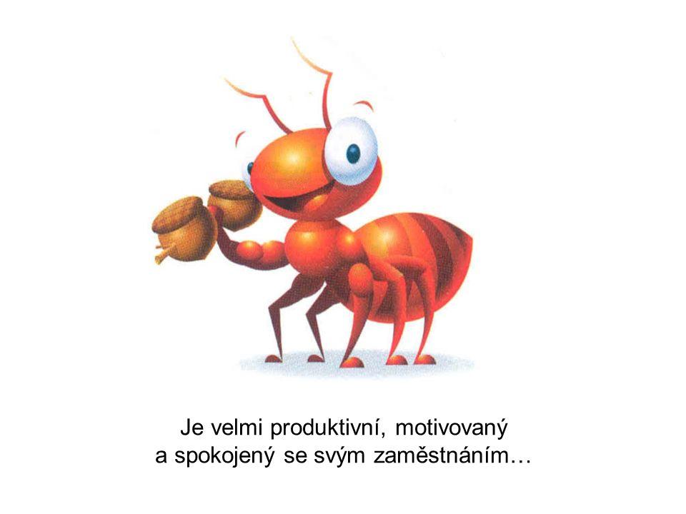 Každý den po včasném příchodu do práce se pouští malý mraveneček okamžitě do práce...