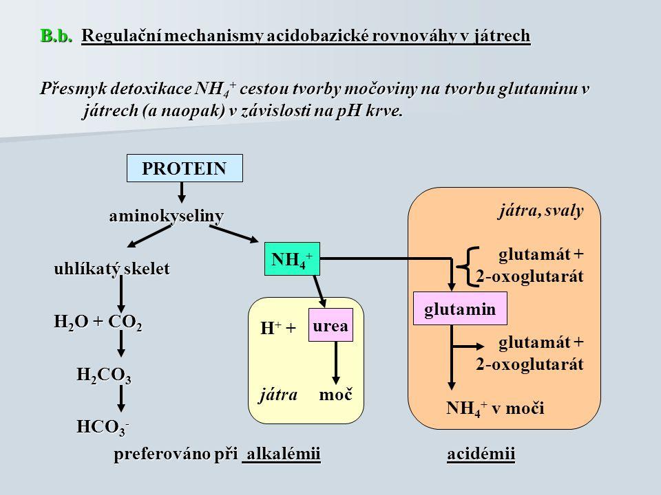 B.b. Regulační mechanismy acidobazické rovnováhy v játrech Přesmyk detoxikace NH 4 + cestou tvorby močoviny na tvorbu glutaminu v játrech (a naopak) v