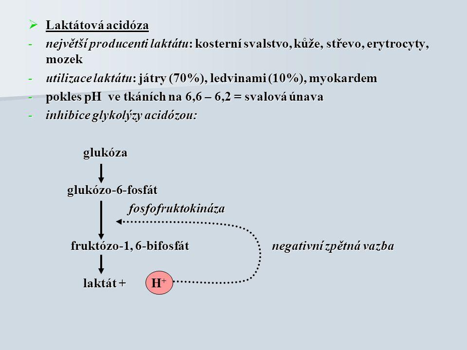  Laktátová acidóza -největší producenti laktátu: kosterní svalstvo, kůže, střevo, erytrocyty, mozek -utilizace laktátu: játry (70%), ledvinami (10%), myokardem -pokles pH ve tkáních na 6,6 – 6,2 = svalová únava -inhibice glykolýzy acidózou: glukóza glukóza glukózo-6-fosfát glukózo-6-fosfát fosfofruktokináza fosfofruktokináza fruktózo-1, 6-bifosfát negativní zpětná vazba fruktózo-1, 6-bifosfát negativní zpětná vazba laktát + laktát + H+H+