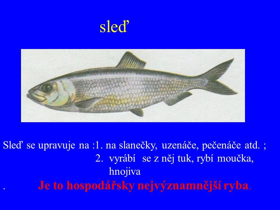 sardinky hejno sardinek Použití : nakládají se do oleje, protlaku…