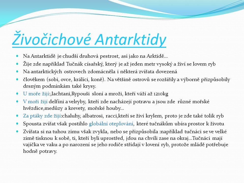 Živočichové Antarktidy Na Antarktidě je chudší druhová pestrost, asi jako na Arktidě... Žije zde například Tučnák císařský, který je až jeden metr vys