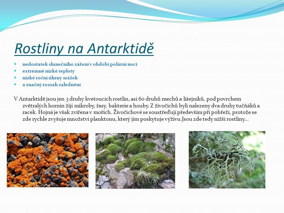 Rostliny na Antarktidě nedostatek slunečního záření v období polární noci extrémně nízké teploty nízké roční úhrny srážek a značný rozsah zalednění V Antarktidě jsou jen 3 druhy kvetoucích rostlin, asi 60 druhů mechů a lišejníků, pod povrchem zvětralých hornin žijí mikroby, řasy, bakterie a houby.