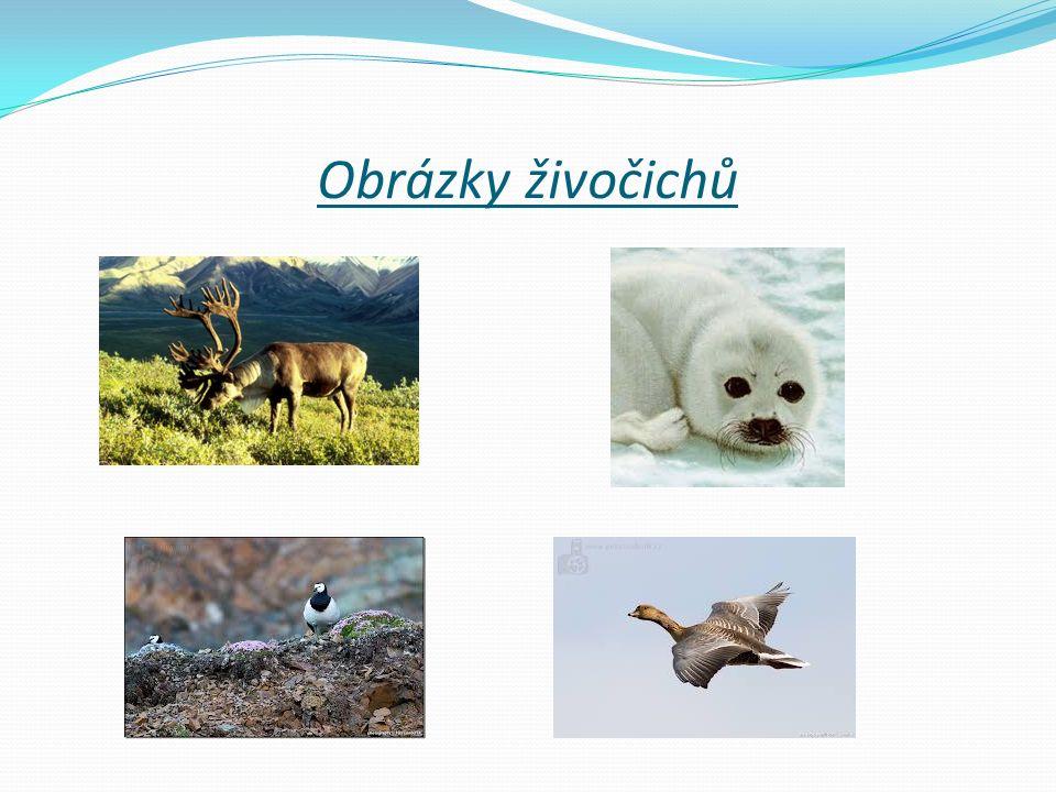 Obrázky živočichů