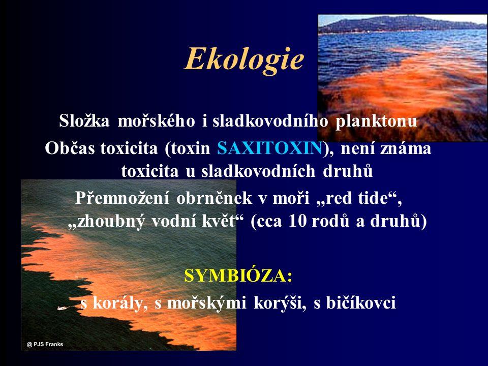 """Ekologie Složka mořského i sladkovodního planktonu Občas toxicita (toxin SAXITOXIN), není známa toxicita u sladkovodních druhů Přemnožení obrněnek v moři """"red tide , """"zhoubný vodní květ (cca 10 rodů a druhů) SYMBIÓZA: s korály, s mořskými korýši, s bičíkovci"""