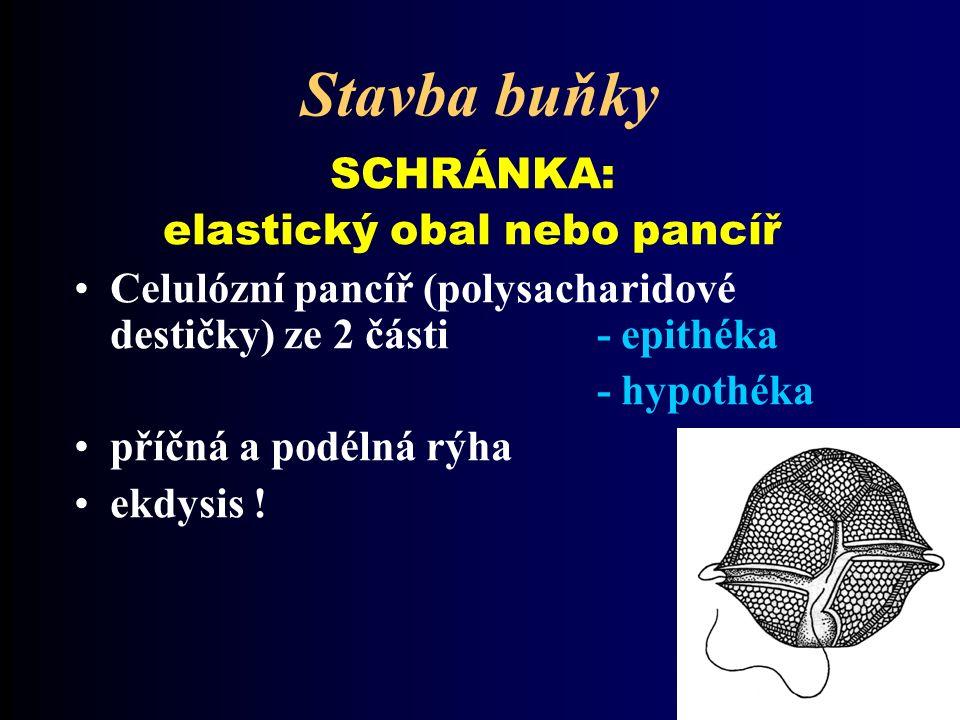 Stavba buňky SCHRÁNKA: elastický obal nebo pancíř Celulózní pancíř (polysacharidové destičky) ze 2 části - epithéka - hypothéka příčná a podélná rýha ekdysis !