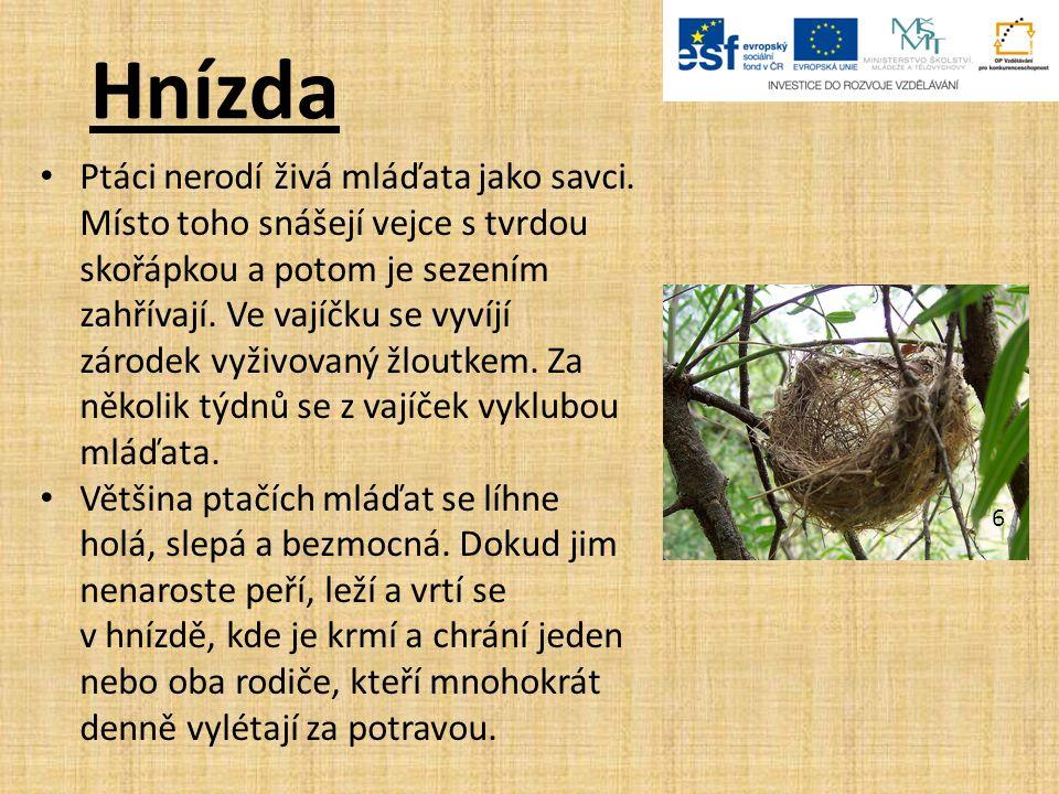 Hnízda Ptáci nerodí živá mláďata jako savci.