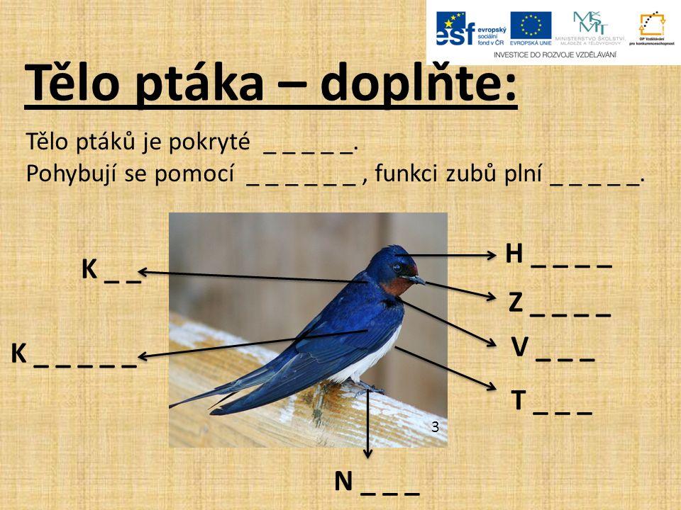 Tělo ptáka – doplňte: Tělo ptáků je pokryté _ _ _ _ _.