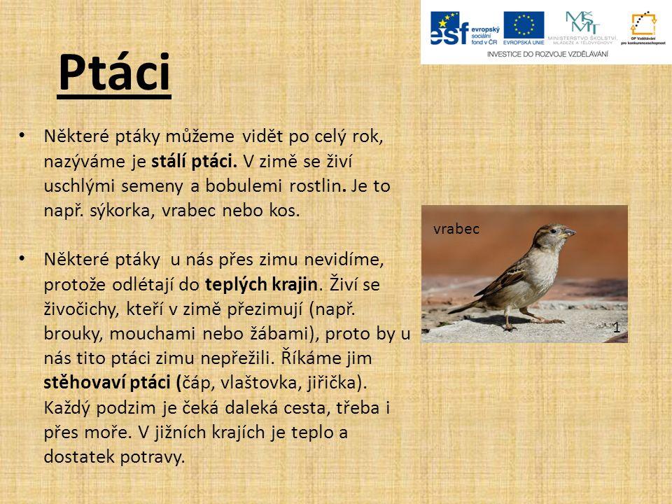 Použité zdroje: 1.House sparrow04.In: Wikipedia: the free encyclopedia [online].