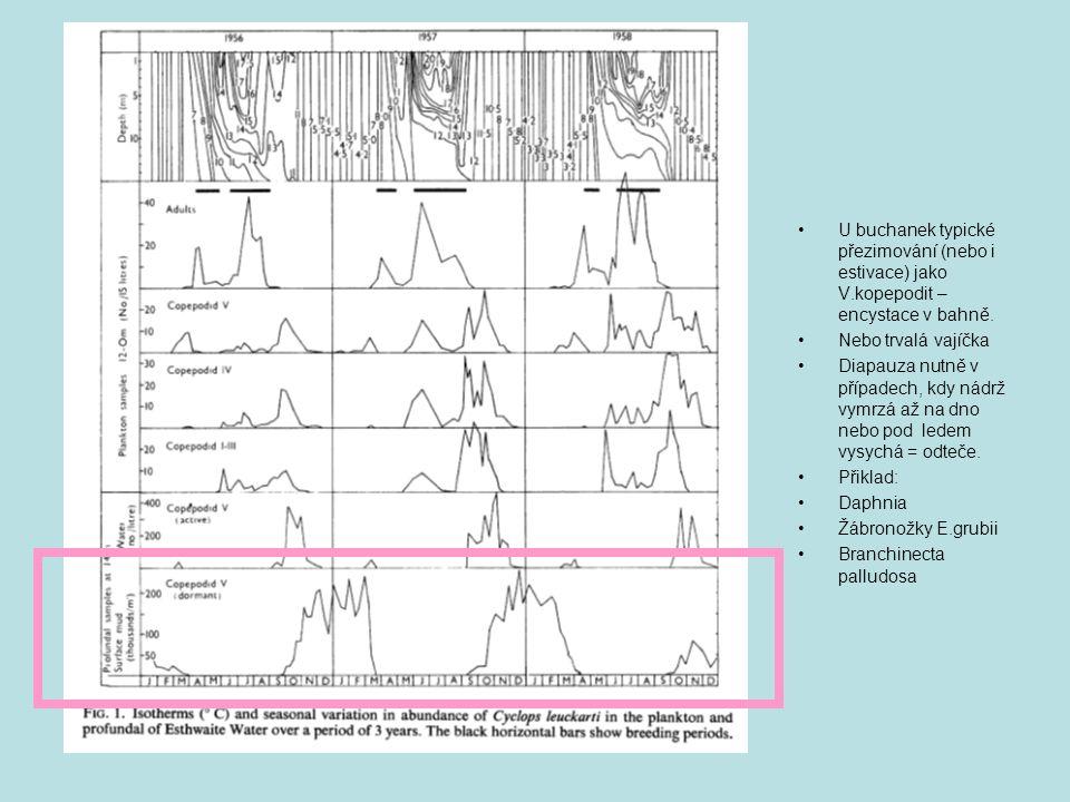 U buchanek typické přezimování (nebo i estivace) jako V.kopepodit – encystace v bahně. Nebo trvalá vajíčka Diapauza nutně v případech, kdy nádrž vymrz