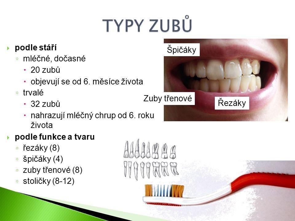  podle stáří ◦ mléčné, dočasné  20 zubů  objevují se od 6.