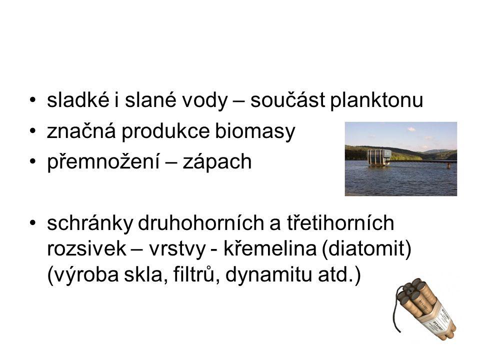 sladké i slané vody – součást planktonu značná produkce biomasy přemnožení – zápach schránky druhohorních a třetihorních rozsivek – vrstvy - křemelina