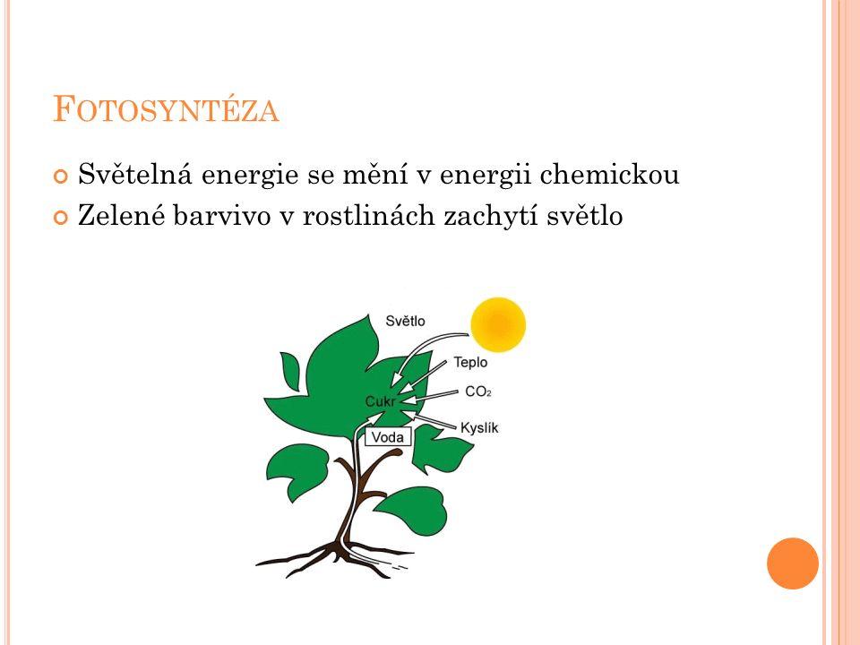 F OTOSYNTÉZA Světelná energie se mění v energii chemickou Zelené barvivo v rostlinách zachytí světlo