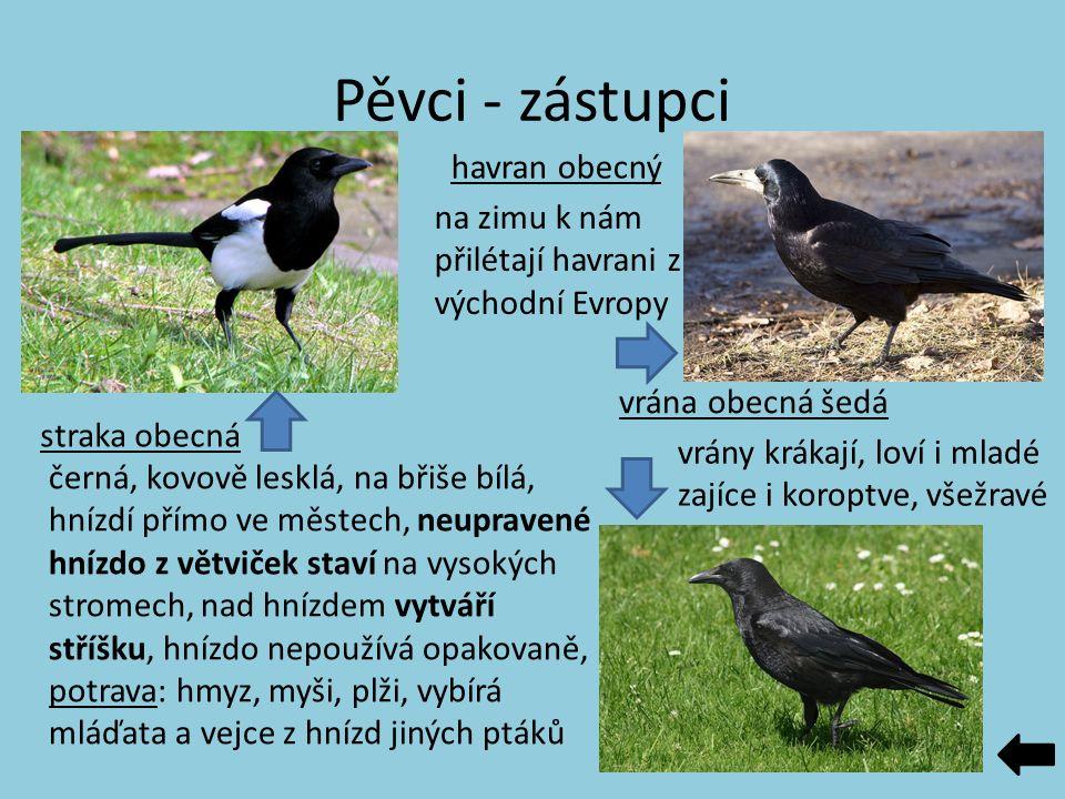 Pěvci - zástupci straka obecná vrána obecná šedá havran obecný černá, kovově lesklá, na břiše bílá, hnízdí přímo ve městech, neupravené hnízdo z větvi