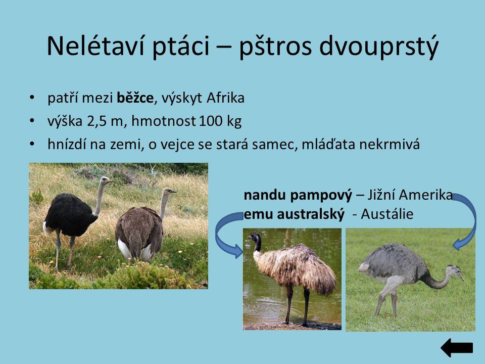 Nelétaví ptáci – pštros dvouprstý patří mezi běžce, výskyt Afrika výška 2,5 m, hmotnost 100 kg hnízdí na zemi, o vejce se stará samec, mláďata nekrmiv