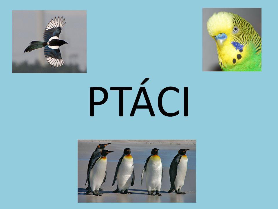 Otázky 1 Který pták klade vejce do hnízd jiných ptáků.