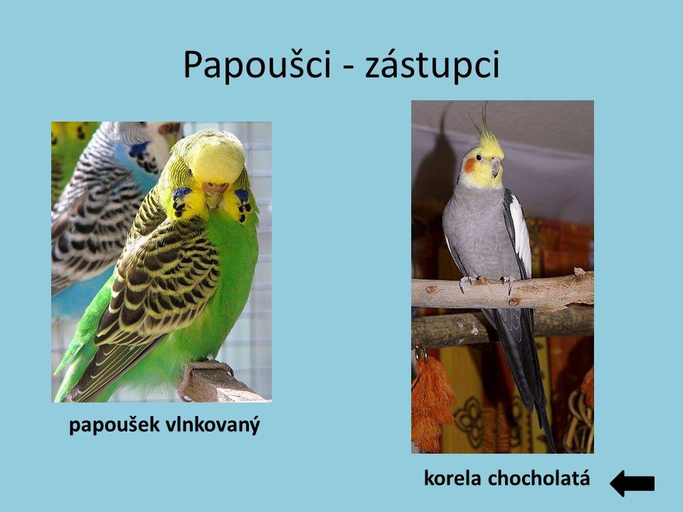 Papoušci - zástupci papoušek vlnkovaný korela chocholatá