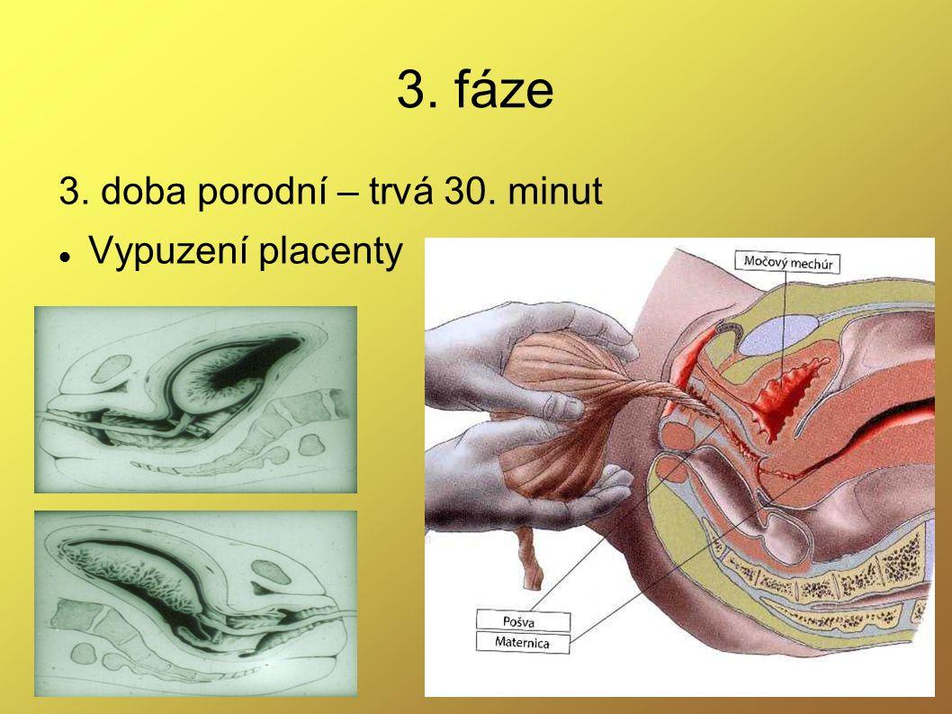 3. fáze 3. doba porodní – trvá 30. minut Vypuzení placenty
