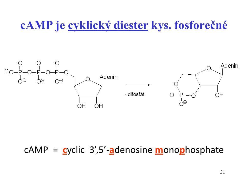 21 cAMP je cyklický diester kys. fosforečné - difosfát cAMP = cyclic 3',5'-adenosine monophosphate