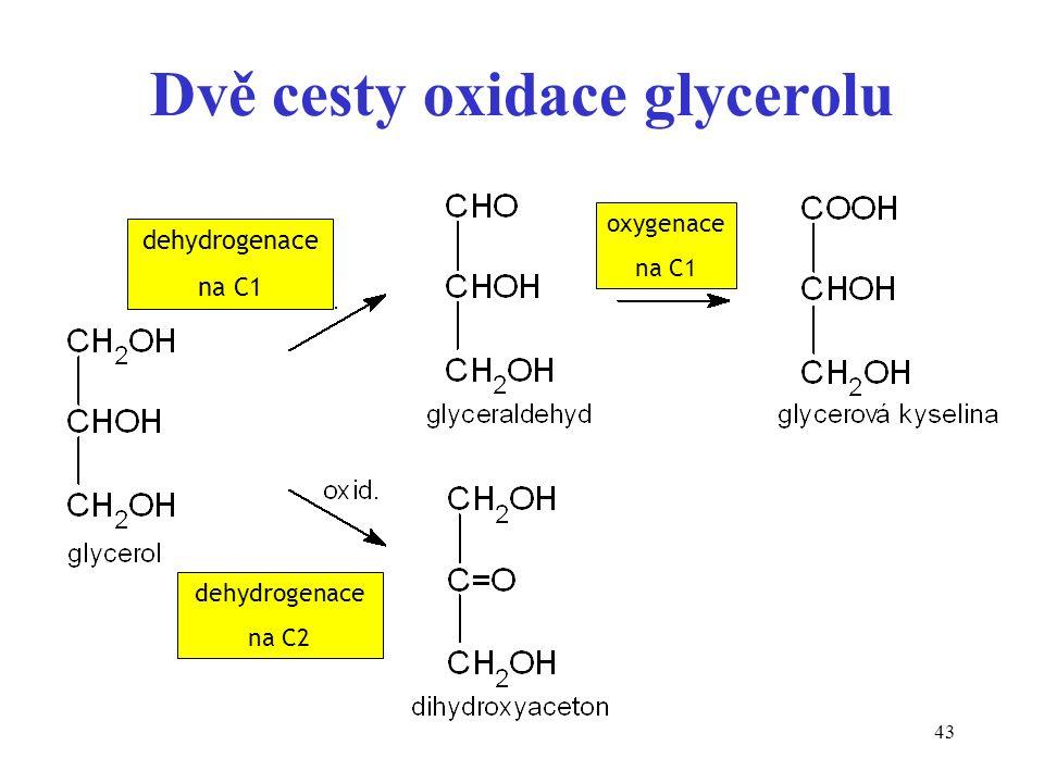 43 Dvě cesty oxidace glycerolu dehydrogenace na C2 dehydrogenace na C1 oxygenace na C1