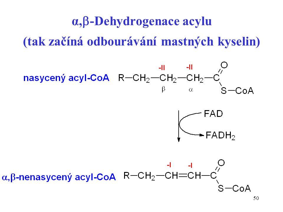 50 α,  -Dehydrogenace acylu (tak začíná odbourávání mastných kyselin)