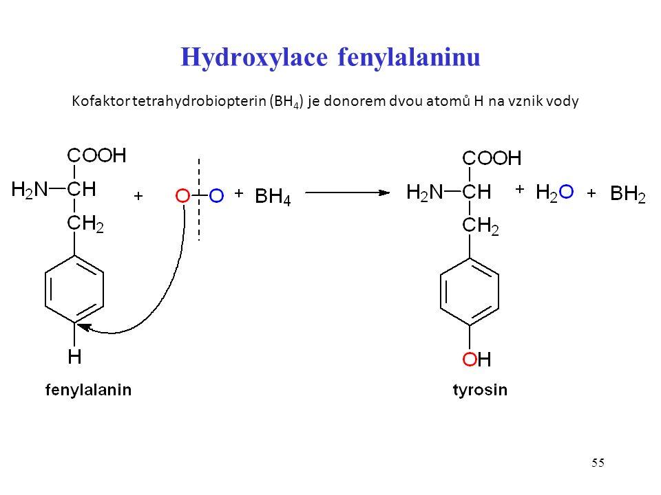 55 Hydroxylace fenylalaninu Kofaktor tetrahydrobiopterin (BH 4 ) je donorem dvou atomů H na vznik vody