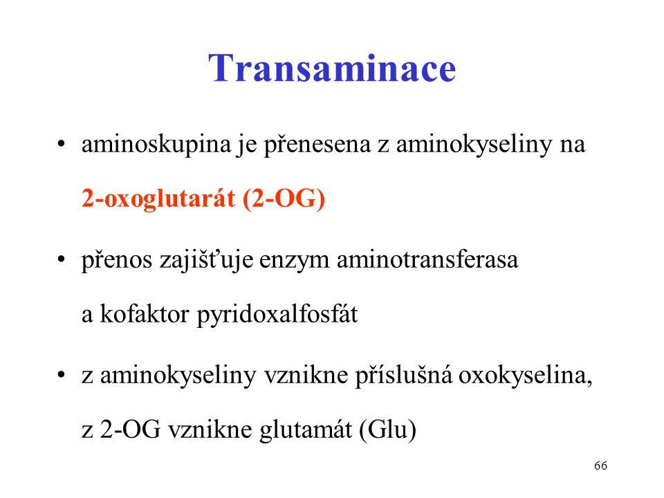 66 Transaminace aminoskupina je přenesena z aminokyseliny na 2-oxoglutarát (2-OG) přenos zajišťuje enzym aminotransferasa a kofaktor pyridoxalfosfát z aminokyseliny vznikne příslušná oxokyselina, z 2-OG vznikne glutamát (Glu)