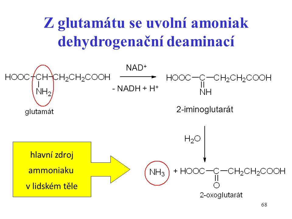 68 NAD + Z glutamátu se uvolní amoniak dehydrogenační deaminací - NADH + H + 2-iminoglutarát hlavní zdroj ammoniaku v lidském těle