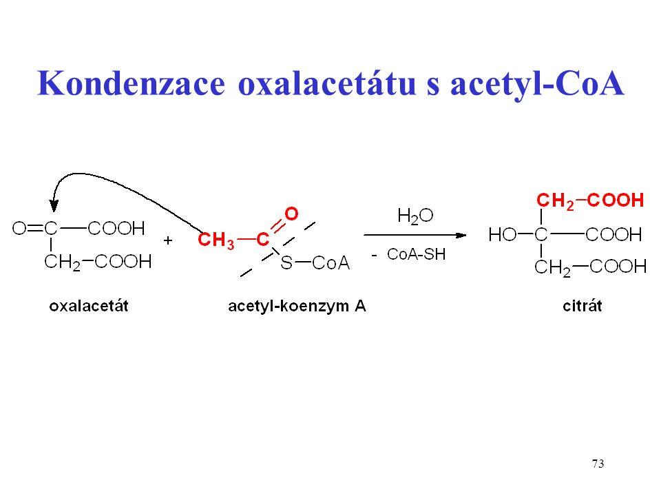 73 Kondenzace oxalacetátu s acetyl-CoA
