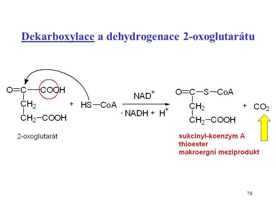 76 Dekarboxylace a dehydrogenace 2-oxoglutarátu