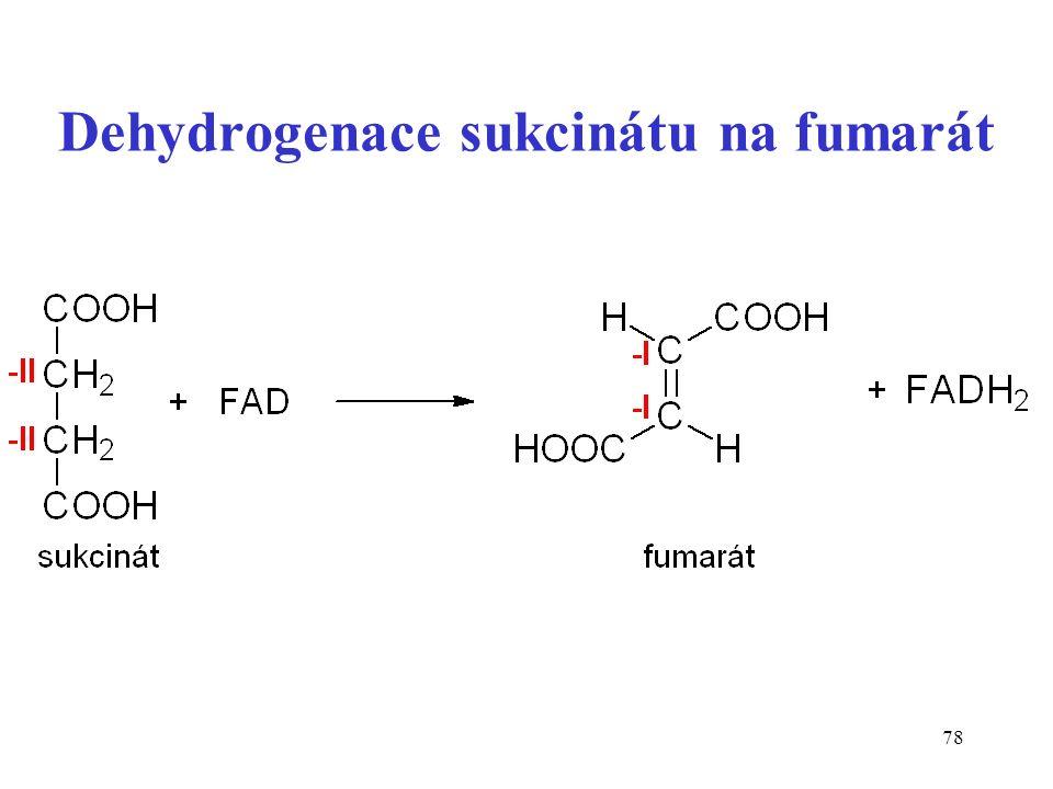 78 Dehydrogenace sukcinátu na fumarát