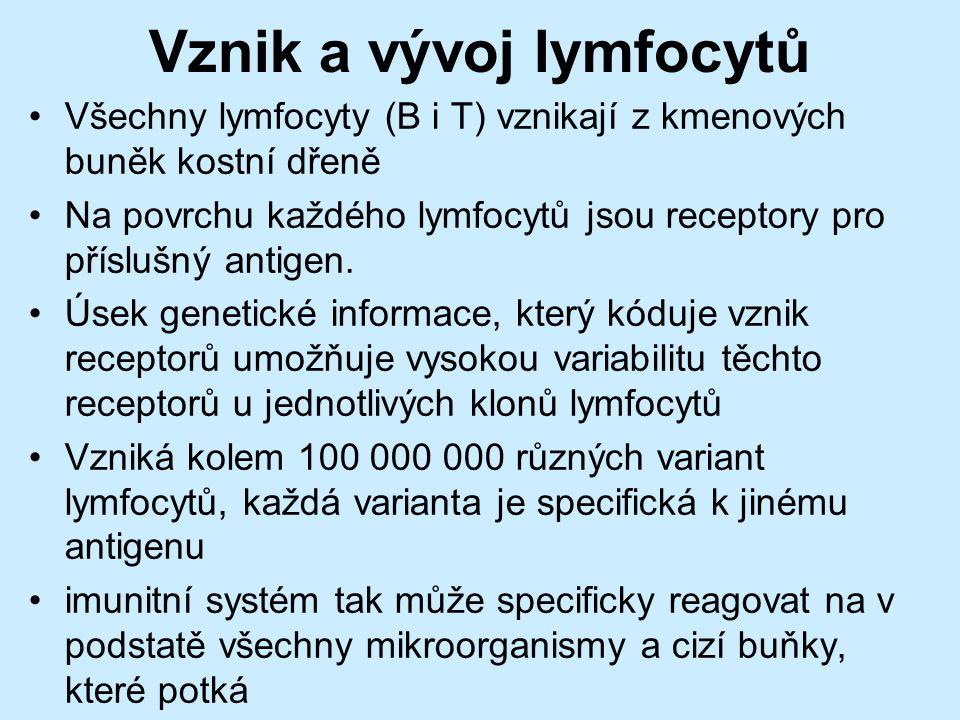 Vznik a vývoj lymfocytů Všechny lymfocyty (B i T) vznikají z kmenových buněk kostní dřeně Na povrchu každého lymfocytů jsou receptory pro příslušný antigen.