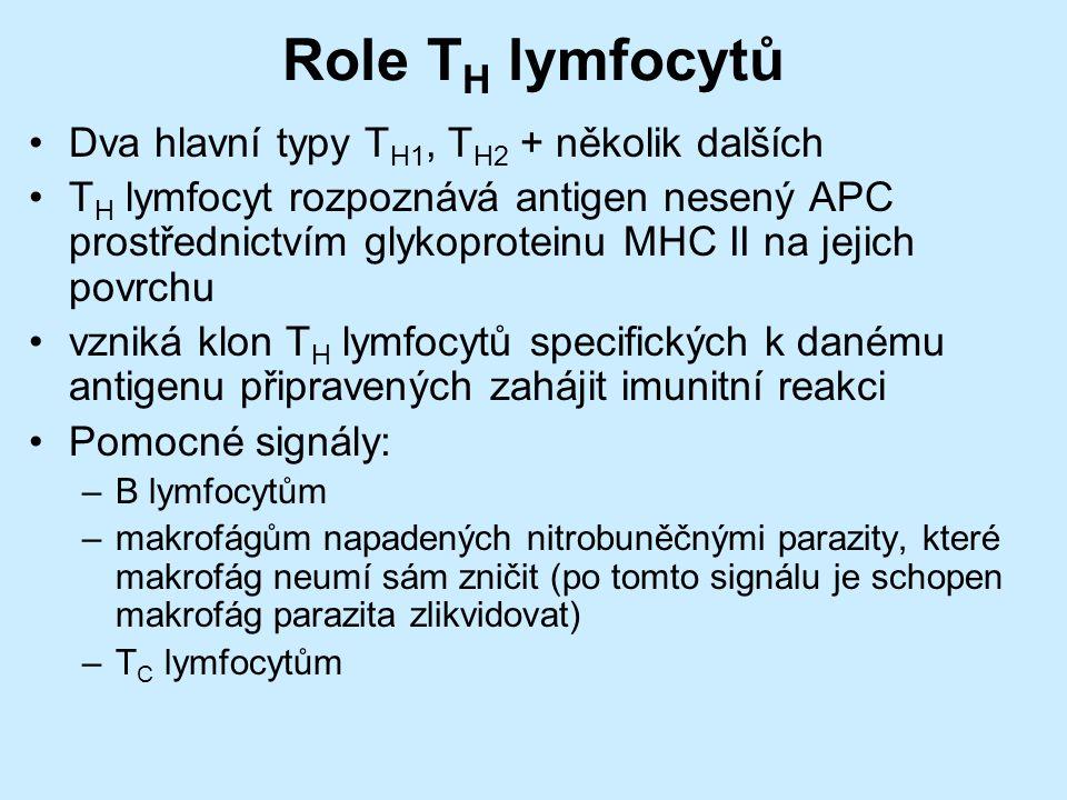 Role T H lymfocytů Dva hlavní typy T H1, T H2 + několik dalších T H lymfocyt rozpoznává antigen nesený APC prostřednictvím glykoproteinu MHC II na jejich povrchu vzniká klon T H lymfocytů specifických k danému antigenu připravených zahájit imunitní reakci Pomocné signály: –B lymfocytům –makrofágům napadených nitrobuněčnými parazity, které makrofág neumí sám zničit (po tomto signálu je schopen makrofág parazita zlikvidovat) –T C lymfocytům