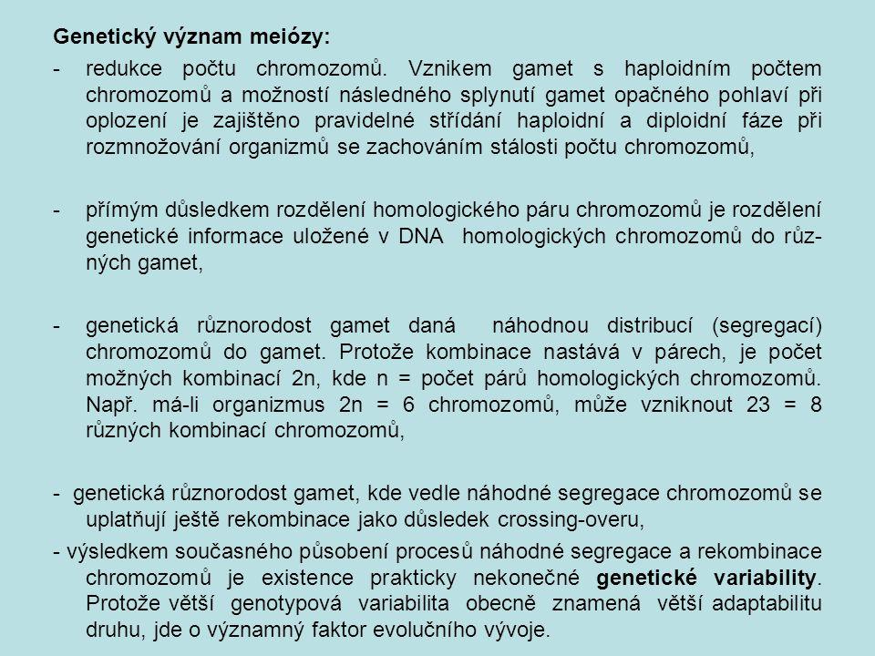 Genetický význam meiózy: -redukce počtu chromozomů.
