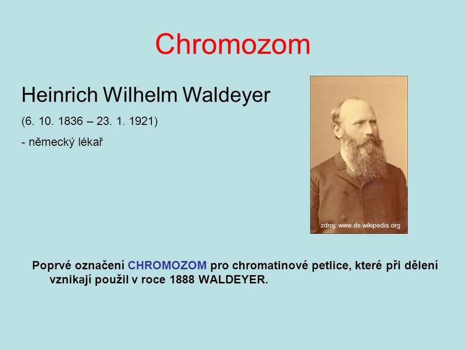 Chromozom Poprvé označení CHROMOZOM pro chromatinové petlice, které při dělení vznikají použil v roce 1888 WALDEYER.