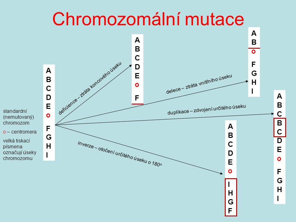 Chromozomální mutace ABCDEoFGHIABCDEoFGHI standardní (nemutovaný) chromozom o – centromera velká tiskací písmena označují úseky chromozomu ABoFGHIABoFGHI ABCDEoFABCDEoF ABCBCDEoFGHIABCBCDEoFGHI deficience – ztráta koncového úseku delece – ztráta vnitřního úseku duplikace – zdvojení určitého úseku ABCDEoIHGFABCDEoIHGF inverze – otočení určitého úseku o 180 o