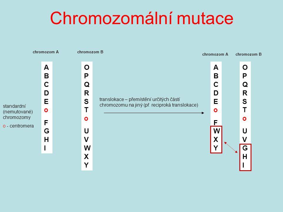 Chromozomální mutace ABCDEoFGHIABCDEoFGHI standardní (nemutované) chromozomy o - centromera OPQRSToUVWXYOPQRSToUVWXY translokace – přemístění určitých částí chromozomu na jiný (př.