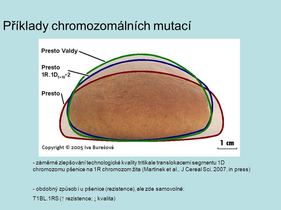 Příklady chromozomálních mutací - záměrné zlepšování technologické kvality tritikale translokacemi segmentu 1D chromozomu pšenice na 1R chromozom žita (Martinek et al., J Cereal Sci, 2007, in press) - obdobný způsob i u pšenice (rezistence), ale zde samovolné: T1BL.1RS (↑ rezistence; ↓ kvalita)