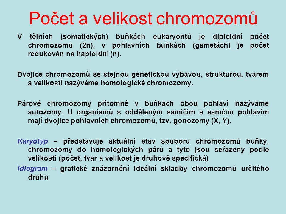 Počet a velikost chromozomů V tělních (somatických) buňkách eukaryontů je diploidní počet chromozomů (2n), v pohlavních buňkách (gametách) je počet redukován na haploidní (n).
